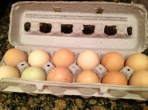 Farm Fresh Eggs 2