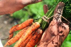 carrotsrealfoodchallenge